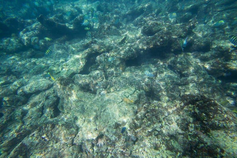 La durata subacquea del mar dei Caraibi fotografia stock libera da diritti