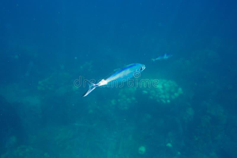 La durata subacquea del mar dei Caraibi fotografie stock