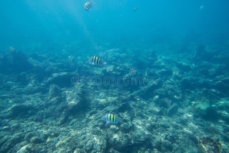 La durata subacquea del mar dei Caraibi fotografie stock libere da diritti