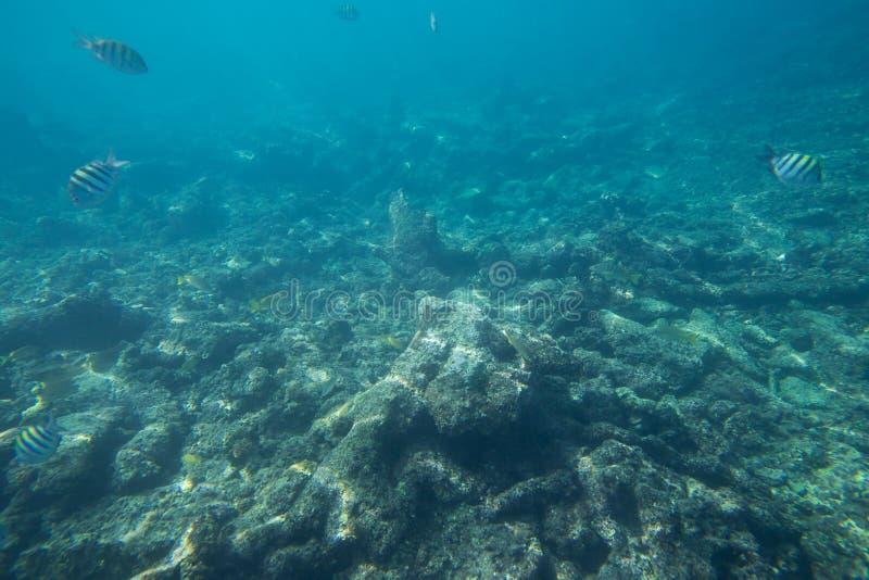 La durata subacquea del mar dei Caraibi immagini stock