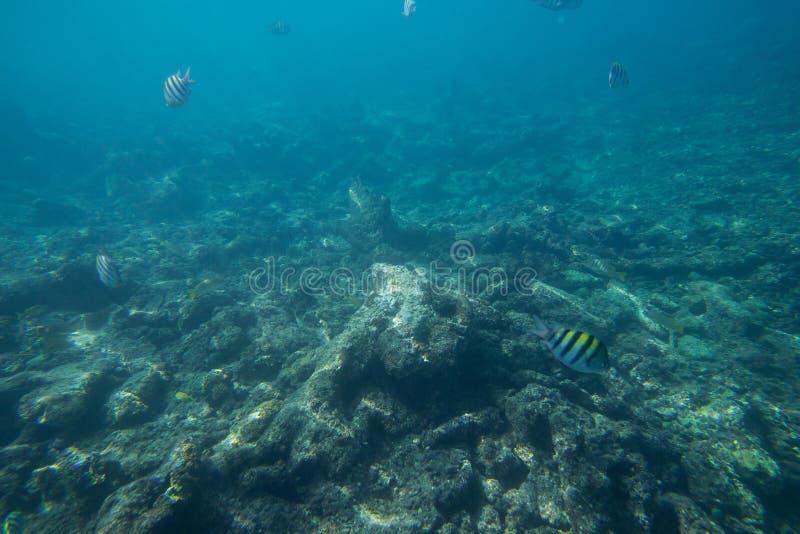 La durata subacquea del mar dei Caraibi immagine stock libera da diritti