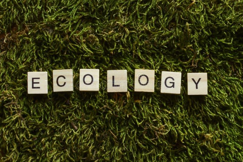 La ecología escrita con las letras de madera cubicó forma en la hierba verde imágenes de archivo libres de regalías