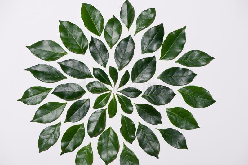 La endecha plana del verde deja el modelo con la taza de café en los vagos blancos imágenes de archivo libres de regalías