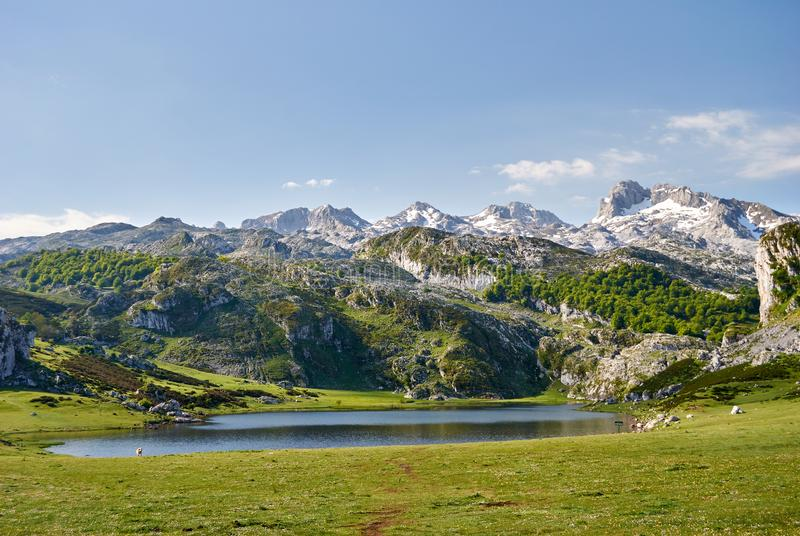 La Ercina lake. Covadonga. Asturias. Spain royalty free stock photos