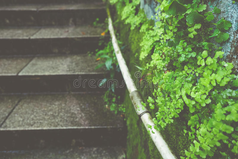 La escalera en la lluvia, cubierta por el musgo y el helecho fotos de archivo libres de regalías