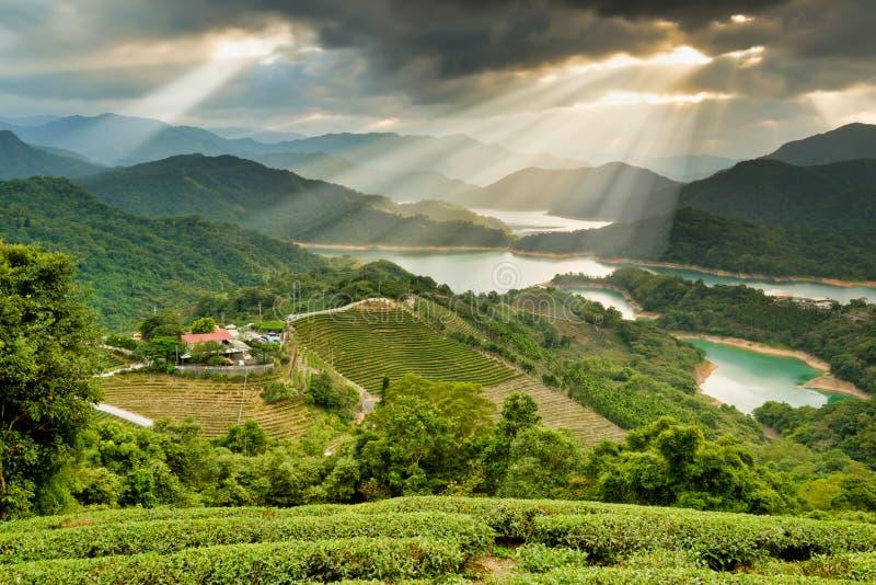 La escena de la belleza en Taiwán, jardín de té de Pakua fotografía de archivo libre de regalías