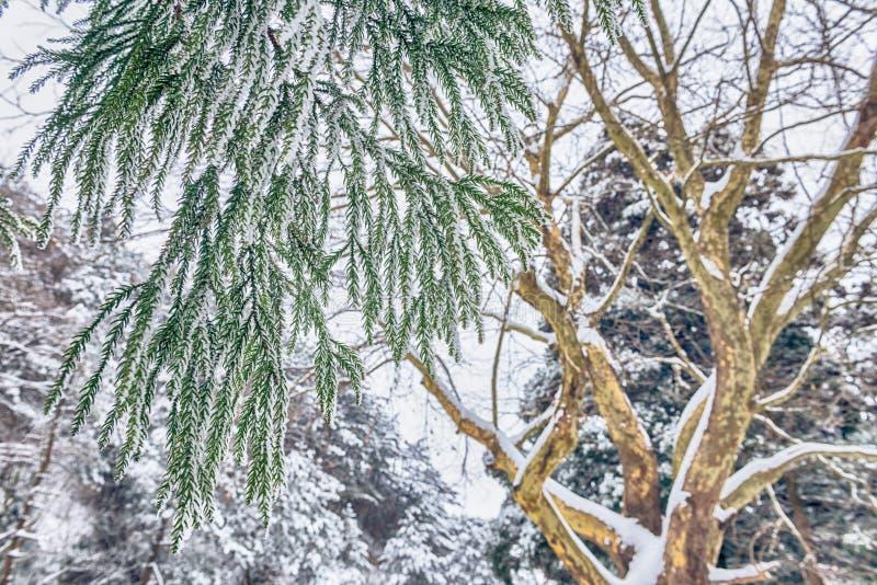 La escena de la esmalte-nieve de la nieve en el soporte Lu foto de archivo libre de regalías