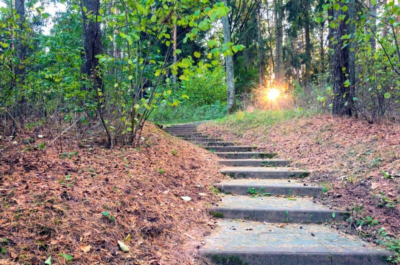 La escena hermosa de la tarde en parque del otoño con el sol irradia imagenes de archivo