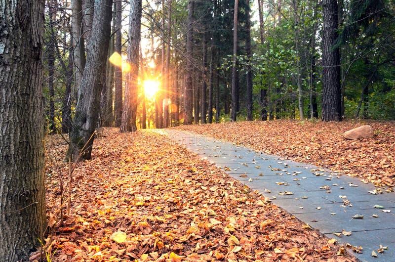 La escena hermosa de la tarde en parque del otoño con el sol irradia fotos de archivo libres de regalías