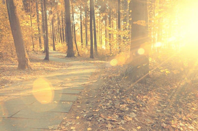 La escena hermosa de la tarde en parque del otoño con el sol irradia foto de archivo