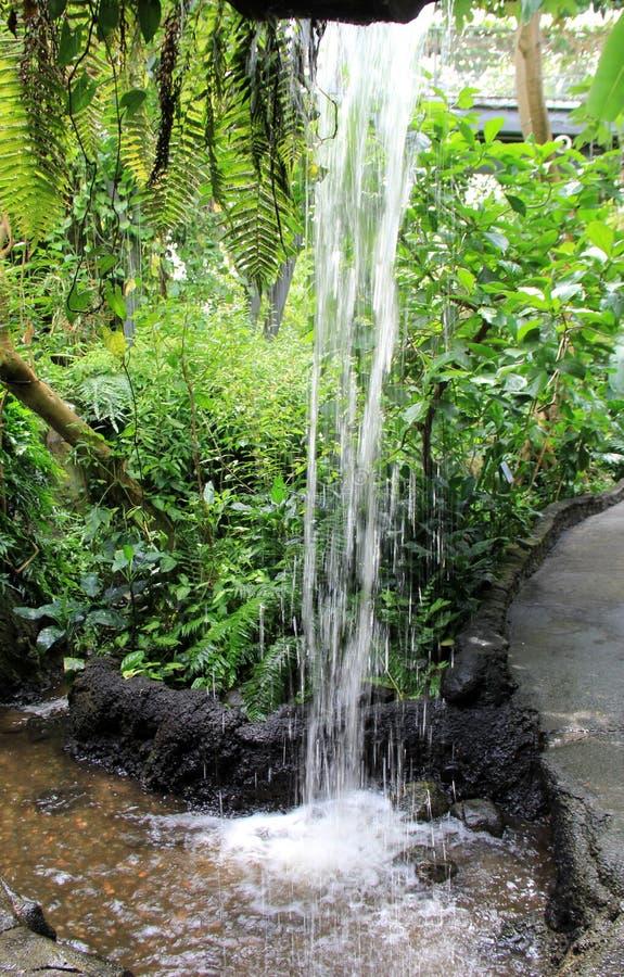 La escena pacífica de la cascada y el verdor del borrachín en selva tropical cultivan un huerto imágenes de archivo libres de regalías
