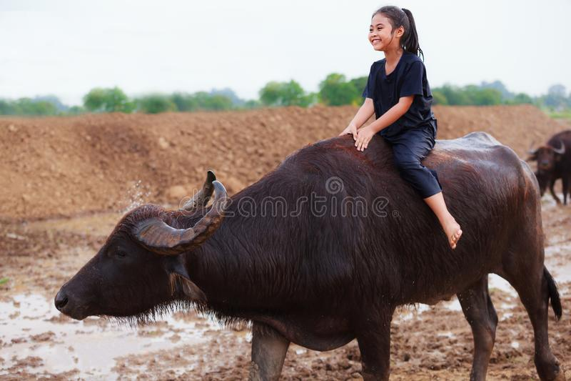 La escena tradicional rural de Tailandia, muchacha tailandesa del pastor del granjero es r foto de archivo