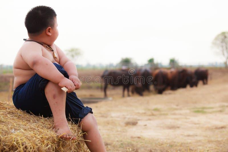 La escena tradicional rural de Tailandia, sentada tailandesa del muchacho del pastor del granjero, tendiendo búfalos reúne en la  imagen de archivo libre de regalías
