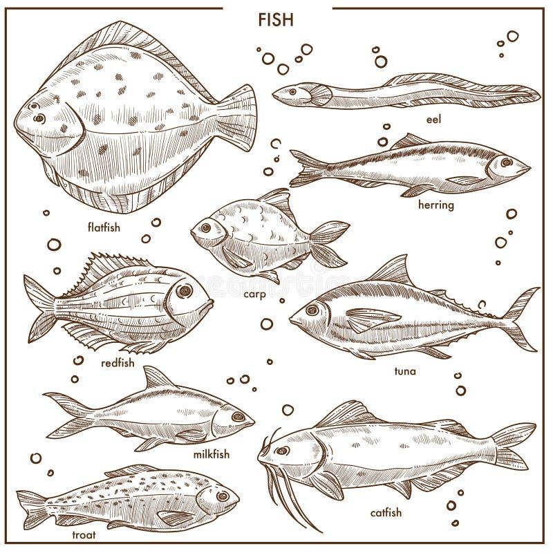 La especie del bosquejo de los pescados con vector de los nombres aisló los iconos de la pesca fijados stock de ilustración