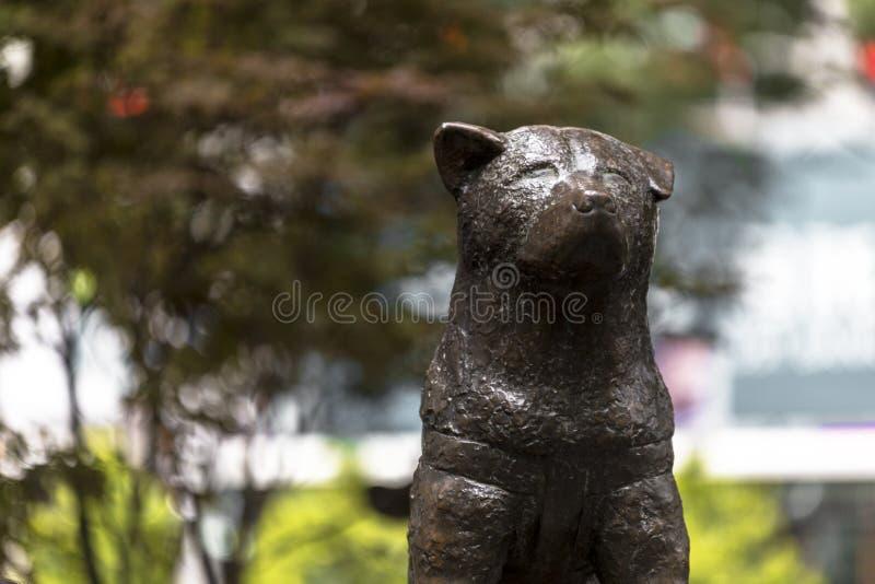 La estatua de Hachiko, un perro japonés de Akita recordaba para su lealtad notable a su dueño imagenes de archivo