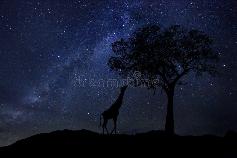 La estrella arrastra manera de la leche en el cielo nocturno de Suráfrica imágenes de archivo libres de regalías