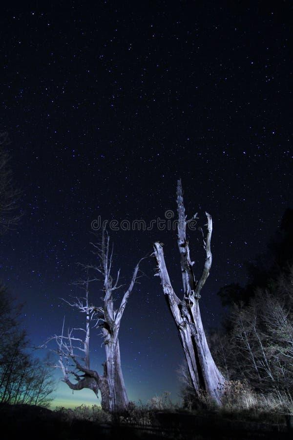 La estrella se arrastra (el árbol del marido y de la esposa) fotografía de archivo libre de regalías