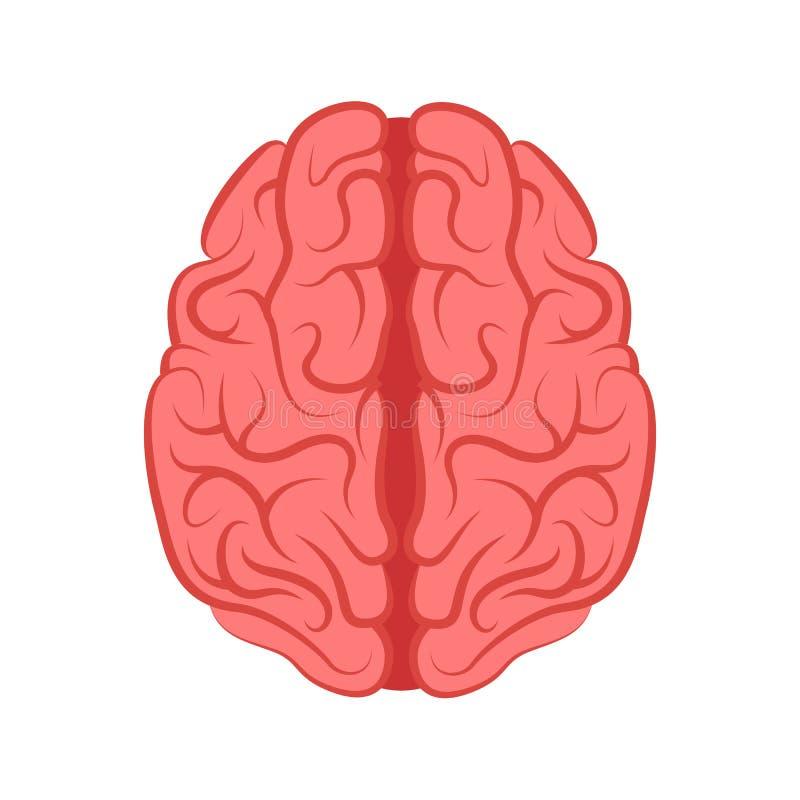 La estructura del cerebro humano - vector libre illustration