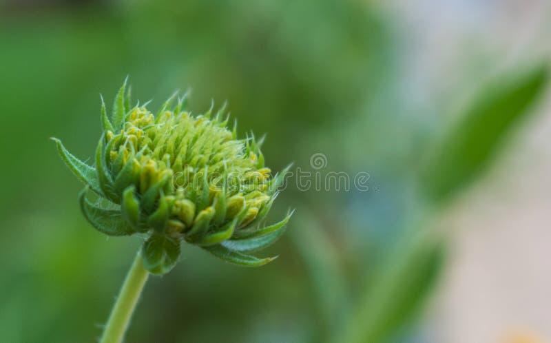 La estructura interna de una flor con el fondo borroso imagenes de archivo