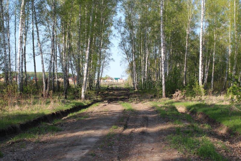 La etapa de la construcción inicial del camino al complejo residencial en el pueblo de Siberia a través del bosque fotografía de archivo libre de regalías