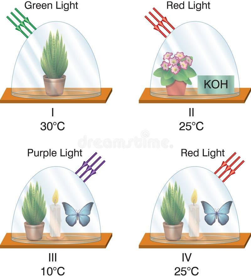 La física - linterna de cristal de los experimentos de la fan ilustración del vector