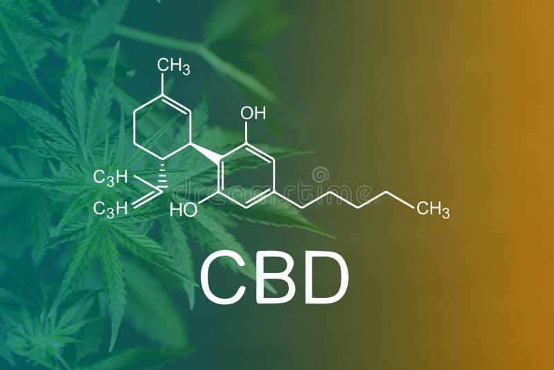La fórmula química de CBD, fórmula química de CBD, fondo hermoso del cáñamo verde florece el lugar de A para el espacio de la cop imagen de archivo libre de regalías