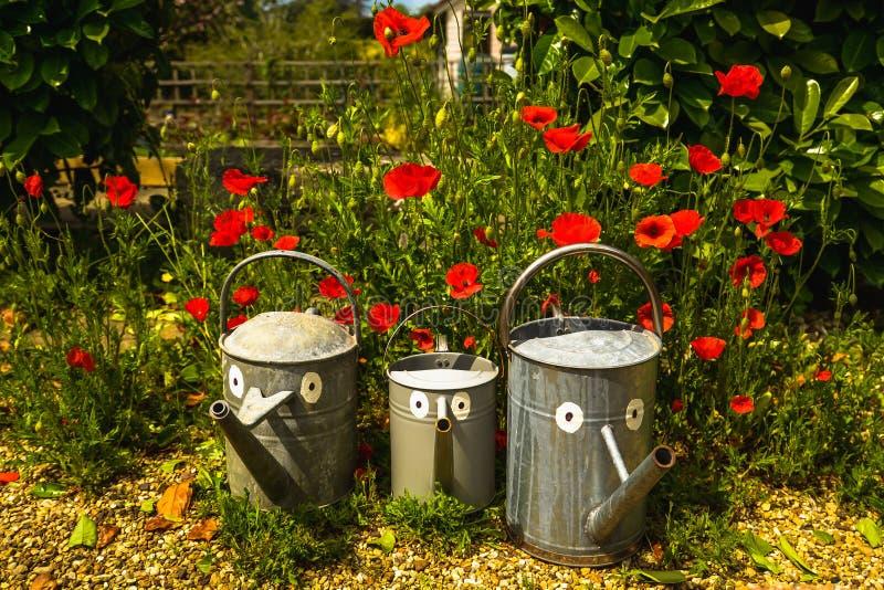 La familia de la regadera en un jardín soleado rodeado por las amapolas rojas imagen de archivo