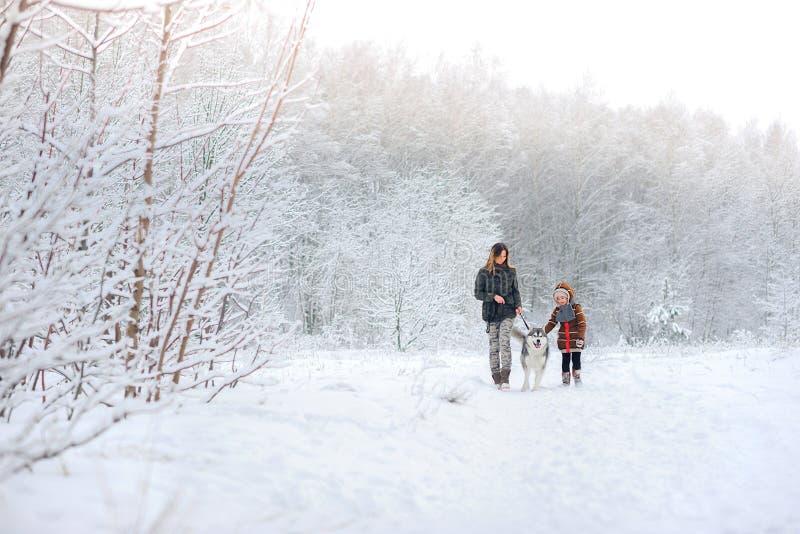La familia feliz camina con los perros esquimales de un perro foto de archivo