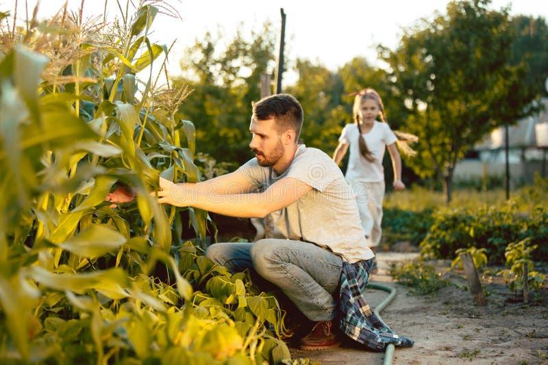 La familia joven feliz durante granos de la cosecha en un jardín al aire libre foto de archivo