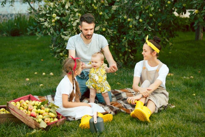 La familia joven feliz durante manzanas de la cosecha en un jardín al aire libre fotografía de archivo