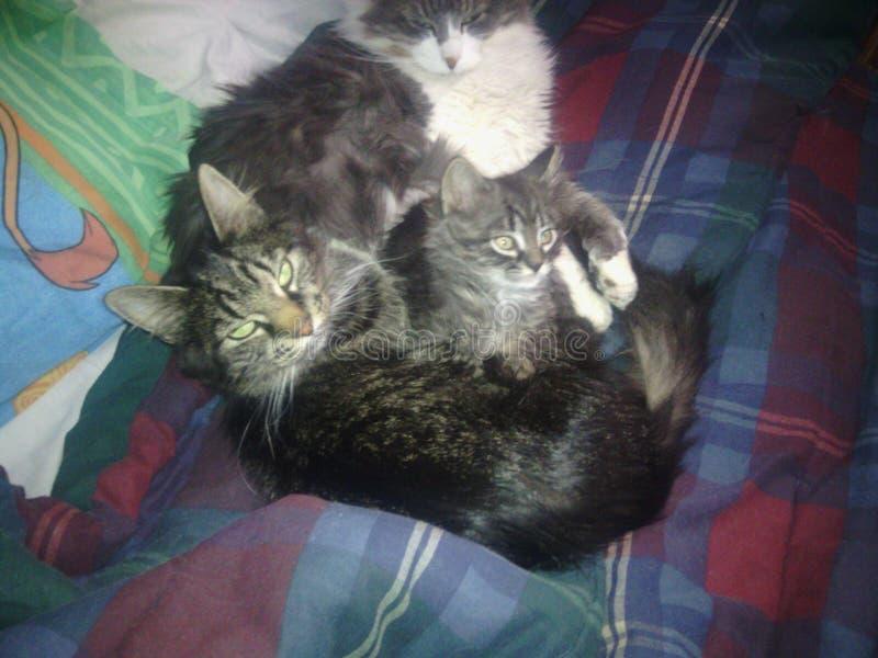 ¡La familia que se acurruca y se calienta tan! foto de archivo libre de regalías