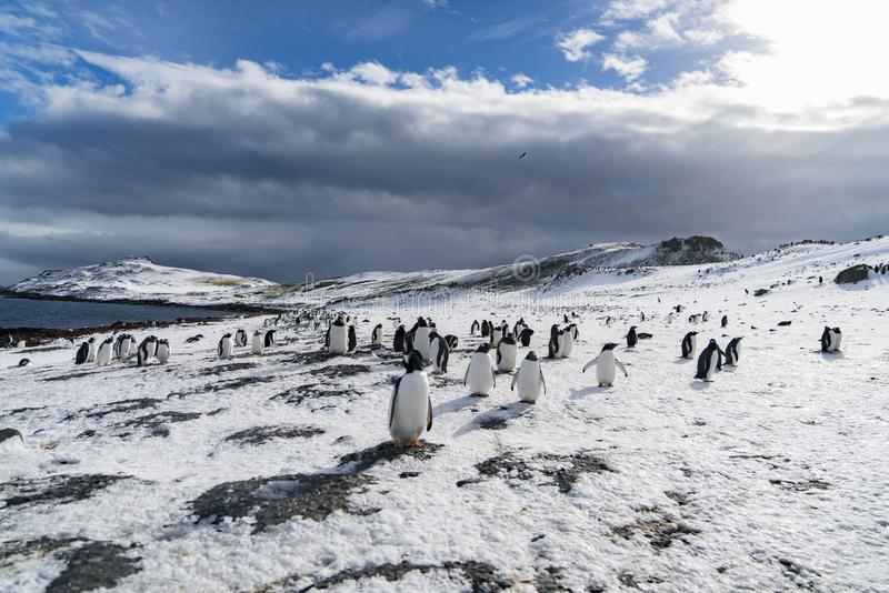 La famille de pingouin au soleil image libre de droits