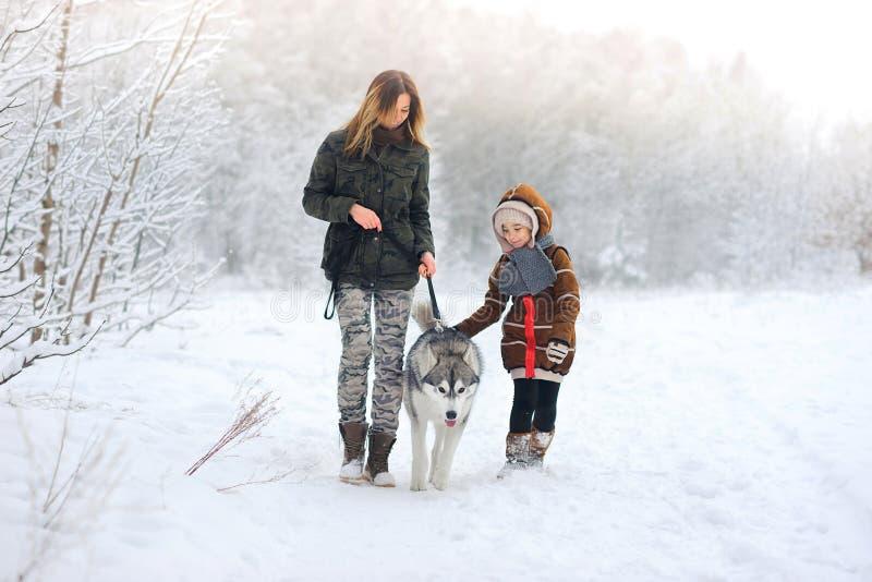 La famille heureuse marche avec des chiens de traîneau d'un chien dans beau au bois de neige image stock