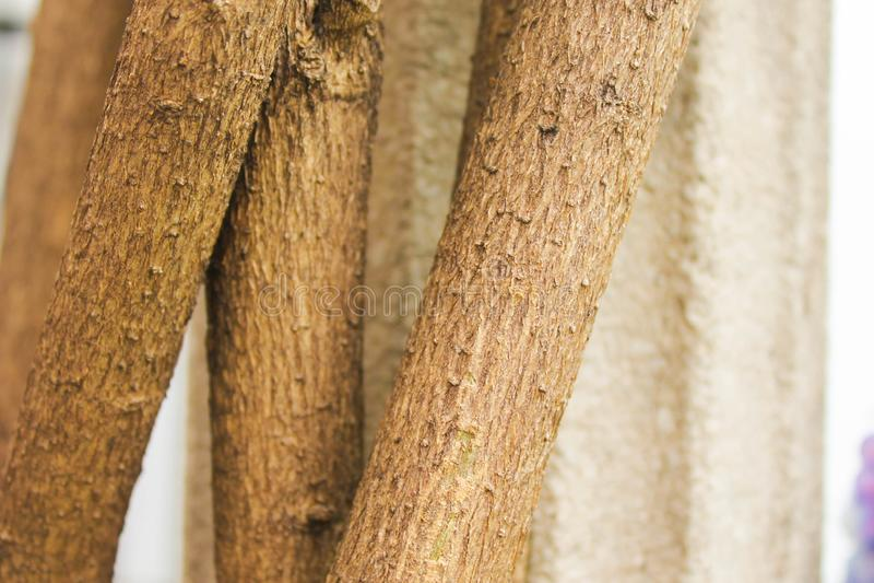 La fantasía una de la mañana de la ecología vegetal del tronco planta foto de archivo libre de regalías