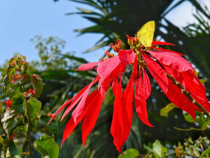 La farfalla gialla fotografie stock libere da diritti