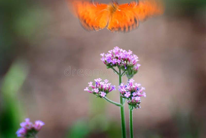 La farfalla toglie fotografia stock