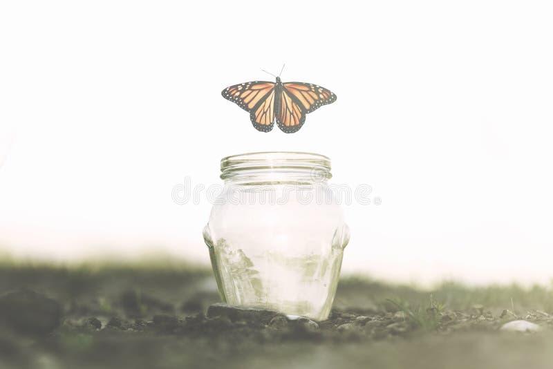 La farfalla vola via velocemente dal barattolo di vetro in cui è stata bloccata immagini stock libere da diritti
