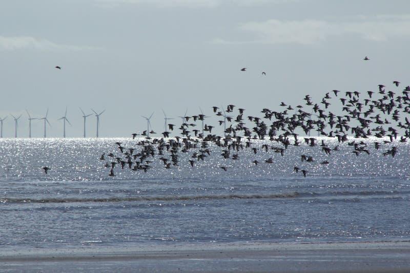 La faune, les oiseaux et les éoliennes en mer photos stock