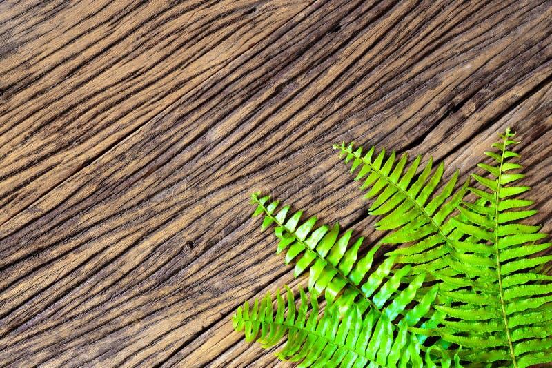 La felce fresca rasenta il fondo di legno di lerciume immagine stock libera da diritti