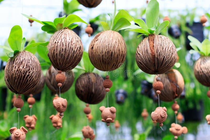 La felce naturale lascia in seme di legno della natura decorato come curta cieco immagine stock
