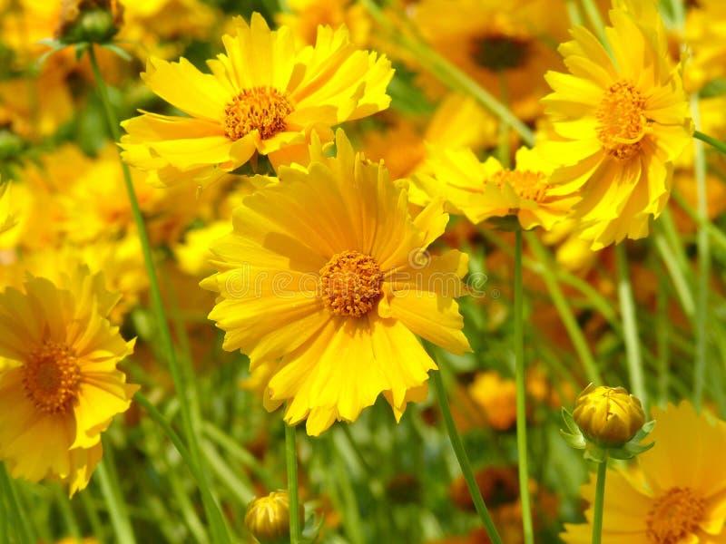 La felicidad es como las flores imagen de archivo libre de regalías