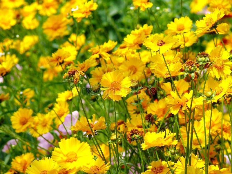 La felicidad es como las flores fotografía de archivo libre de regalías