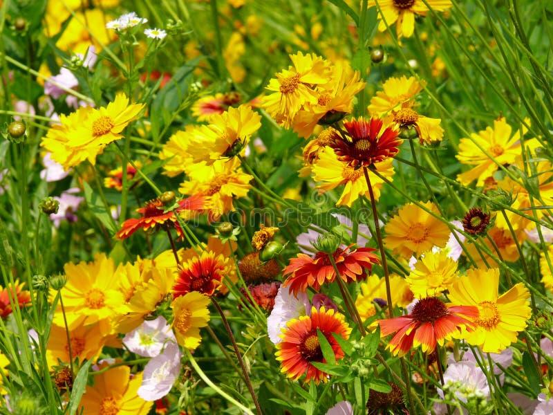 La felicidad es como las flores foto de archivo libre de regalías