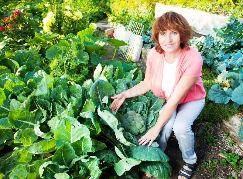 La femelle élève la récolte dans le jardin photos stock