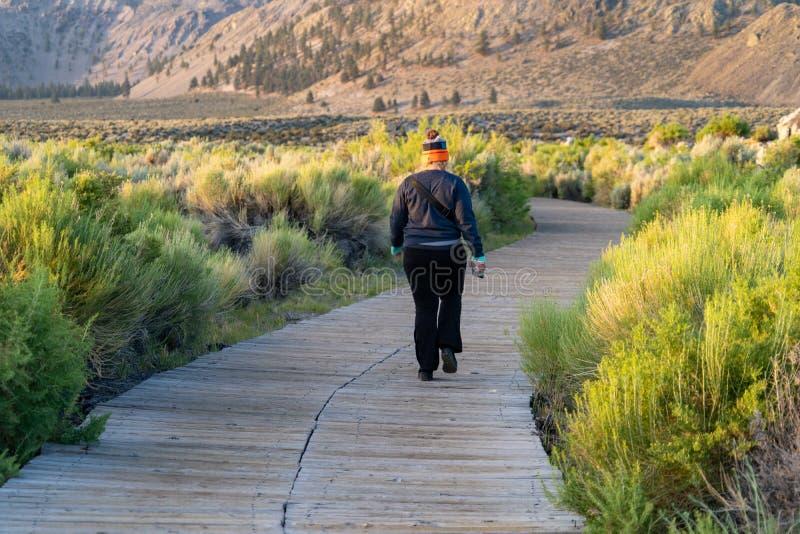 La femelle adulte, revêtement arrière l'appareil-photo, marche loin sur une traînée à la réservation mono d'état de lac en Califo photo libre de droits