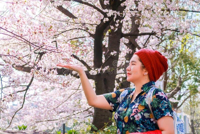 La femme assez asiatique appréciant et regardant des fleurs de cerisier fleurit dans la saison de Sakura photo stock