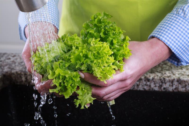 La femme au foyer nettoie une salade verte images libres de droits