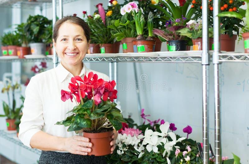 La femme choisit l'usine de cyclamen au fleuriste image stock