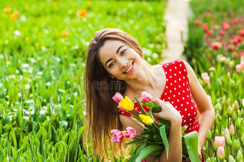 La femme coupe les tulipes photographie stock libre de droits
