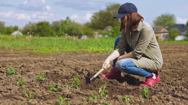 La femme d?tache le sol avant de planter des jeunes plantes images stock